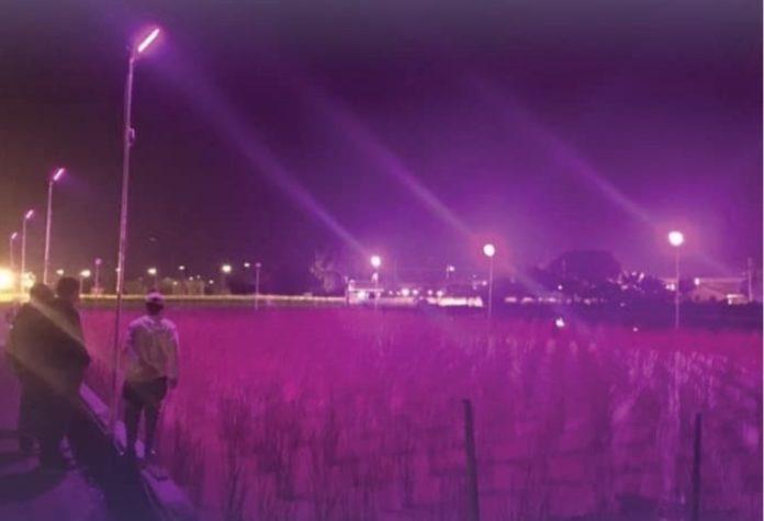 <pre>Исследователи из Тайваня разработали светодиодную систему освещения для водного бамбука, чтобы увеличить урожай и сэкономить до 80% потребления энергии