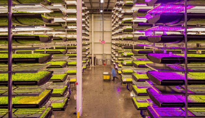<pre>Абу-Даби инвестирует 100 миллионов долларов для запуска проектов вертикальной фермы