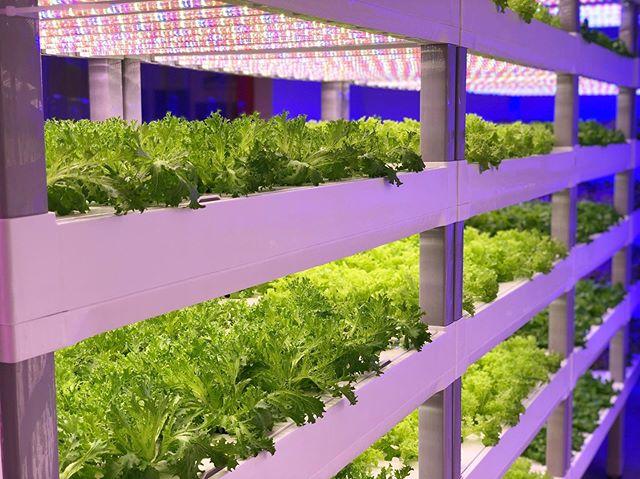 <pre>SANANBIO и Hode Agtech Partner создают вертикальные фермы в Катаре