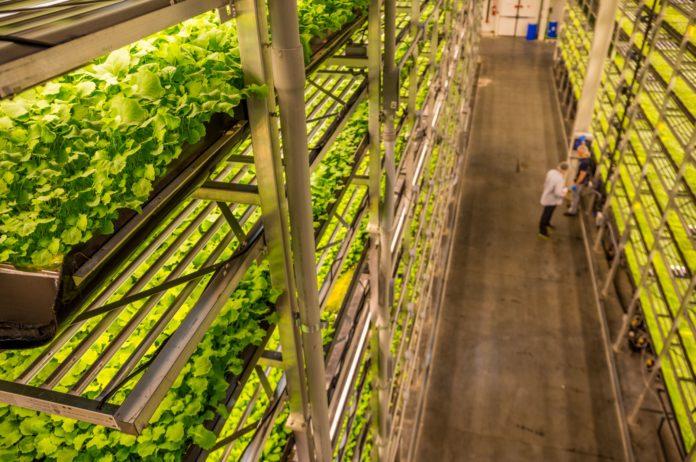 Программа Вертикального Сельского Хозяйства для Обучения Пищевой Образования и Здоровой Диеты в Джерси-Сити, США.