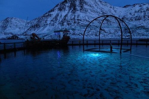 Светодиодное освещение для аквакультуры позволяет оптимизировать результаты роста и снизить эффективность лечения морских вшей