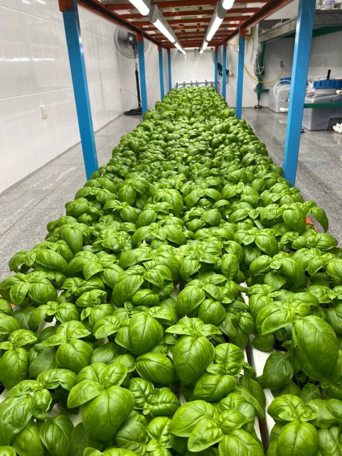 Светодиоды SunLike с естественным спектром Seoul Semiconductor, принятые компанией Fiberli, дают свет для проектов садоводства в Турции