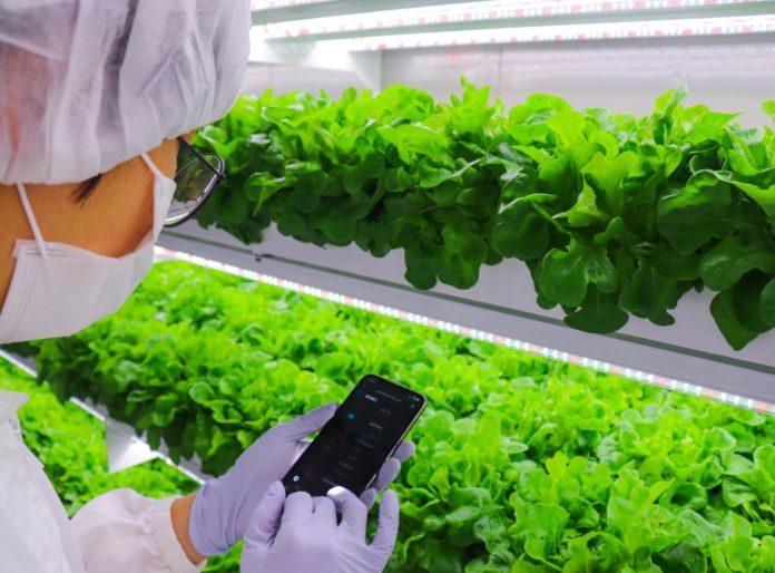 Вертикальная ферма в Абу-Даби будет производить свежий салат в 3К20
