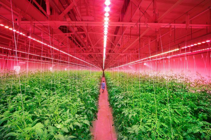 Консорциум DesignLights обновляет технические требования к светодиодному освещению для садоводства