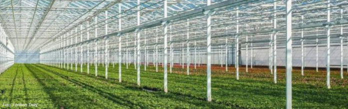 Oreon поставляет светодиодные светильники для теплиц в России и производителя лекарственного каннабиса в Дании