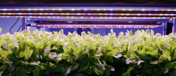 Освещение для садоводства на основе светодиодов, которое будет установлено в коммерческих зданиях, нарушая ограничения роста растений