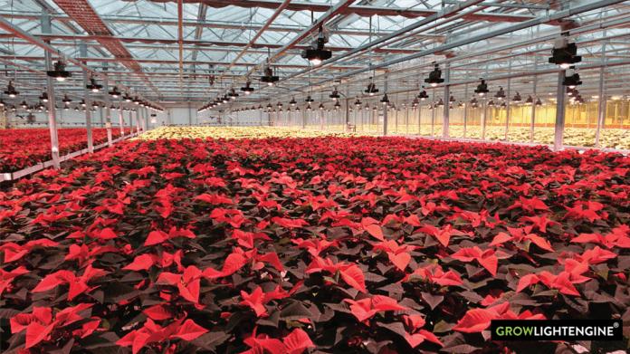 Валоя и партнер Citizen Electronics разрабатывают светодиодные продукты для садоводства