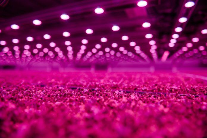 Компания Signify поставляет светодиодное освещение для поддержки производства продуктов питания на фермах GoodLeaf в течение всего года