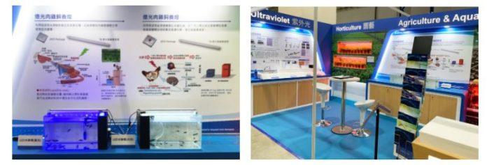 Новая надежда на молодь морского окуня! Everlight Electronics и команда Национального Тайваньского университета разработали светодиодные лампы специально для групперов!