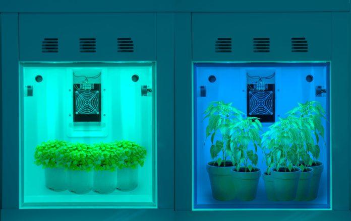 <pre>Британские исследователи разрабатывают интеллектуальную камеру на основе светодиодов, чтобы найти рецепт роста для передовых решений для внутреннего хозяйства