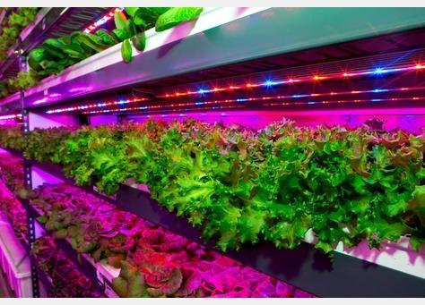 <pre>Emirates строит крупнейшую в мире вертикальную ферму со светодиодным освещением