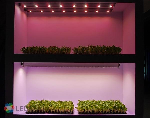 <pre>Heliospectra поставляет светодиодные лампы для теплиц в Великобритании и Австралии