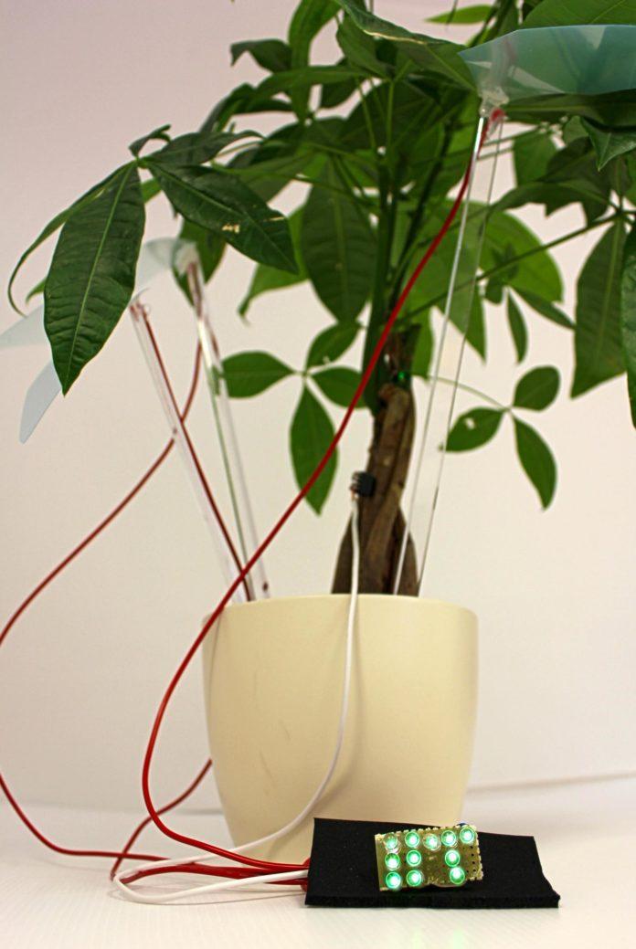 <pre>Итальянские исследователи зажигают светодиодные лампы с растениями