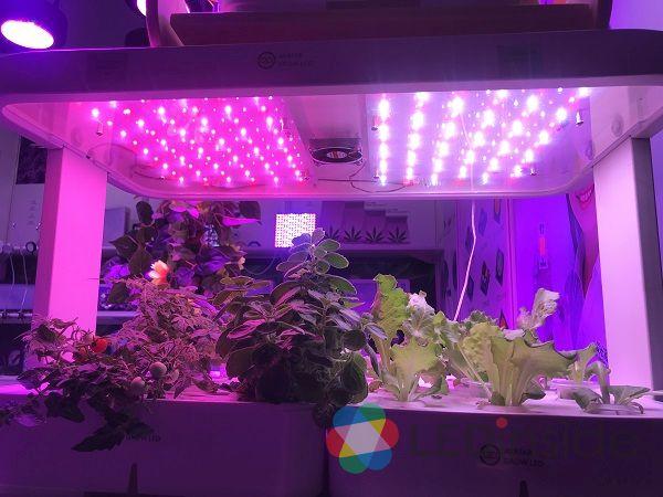 <pre>OPTEC International продаст светодиодные лампы для садоводства Pro-Sun в связи с принятием Конгрессом США законопроекта о фермерских хозяйствах