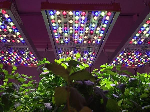 <pre>Osram разрабатывает решения Grow Light для исследований в области садоводства