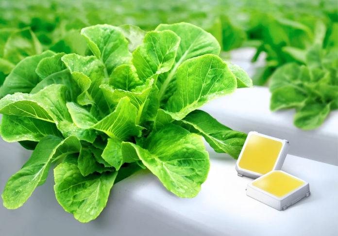 <pre>Samsung представляет преимущества светодиодов для садоводства для вертикального земледелия