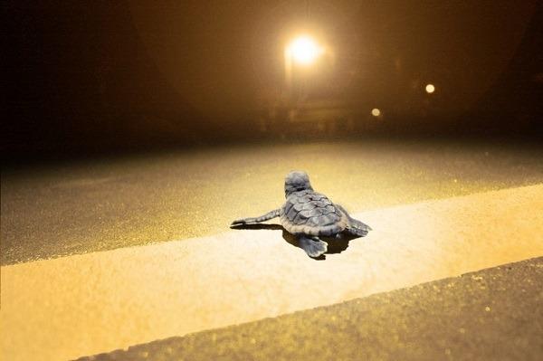 <pre>Светодиод для уменьшения воздействия искусственного освещения на дикую природу