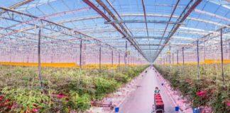 Signify помогает расширяться Агро-инвесту в выращивании агрокультур в России